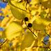 Az ősz színei No 001