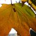 Pókhálós ősz