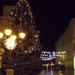 Mindenki karácsonyfája Szegeden