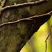 Album - Az erdő Pont-de-Cheruy mellett