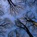 A tél fákkal festi az eget
