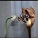 vitorla virágok