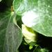 növények 020