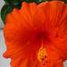 növények 027