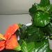 növények 038