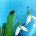 Hohó-virág mail