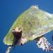 Album - Teknősök az Indiai óceánból