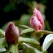 alma virágok 009