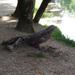Krokodilfa