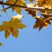 Album - ősz