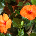 Album - narancsok