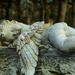 Pihenő angyal