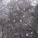márciusi hópelyhek