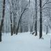 MÁRCIUS 11. -- tél a tavaszban