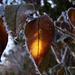 téli képek, pici melegség