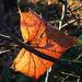 őszi színek, nem lett avar belőle