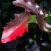őszi színek, szép de szúr